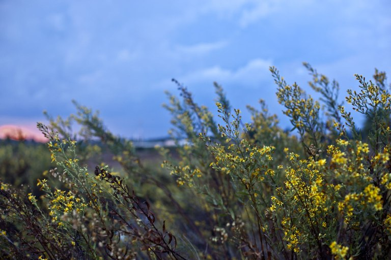Canon EOS 5D MK II. Ramat HaSharon, Israel. 2012.