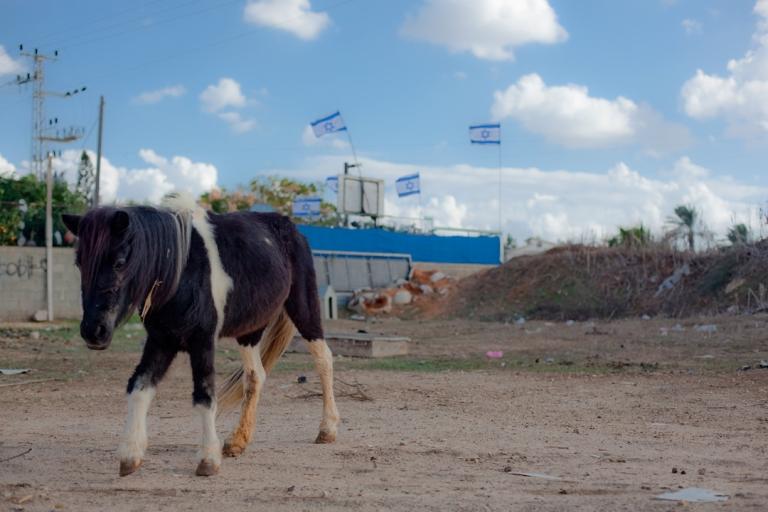 Canon EOS 5D MK II. Glil Yam, Israel. 2012.