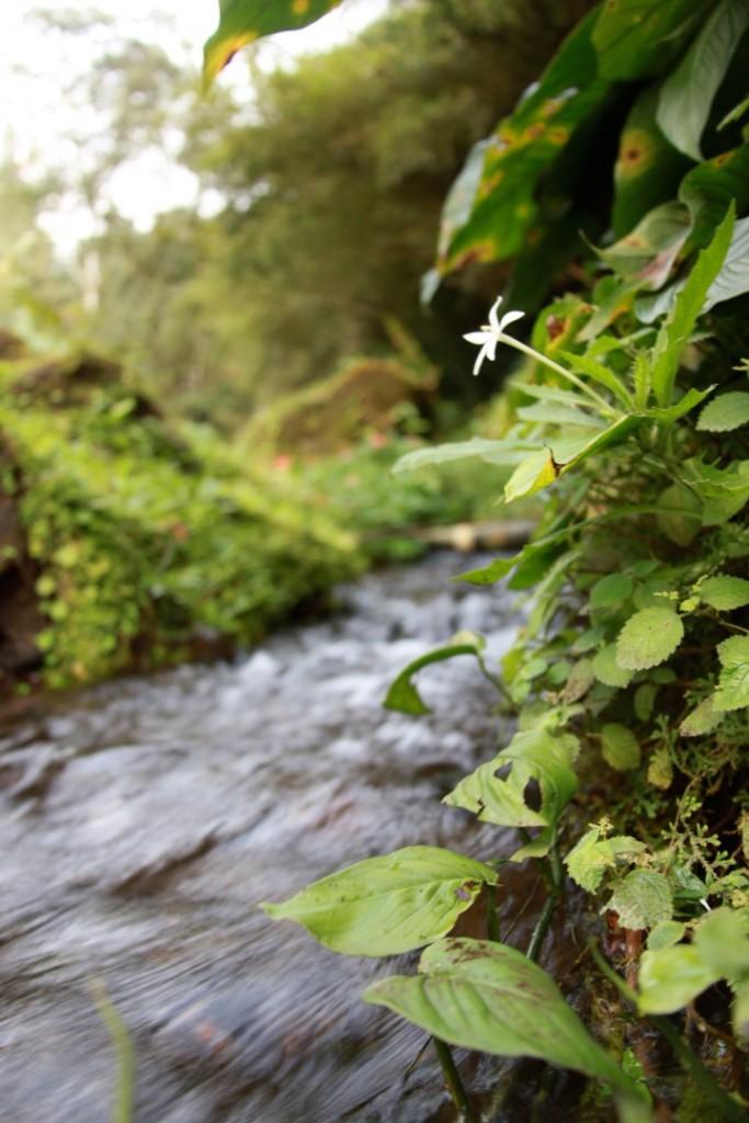 Serenity of flow